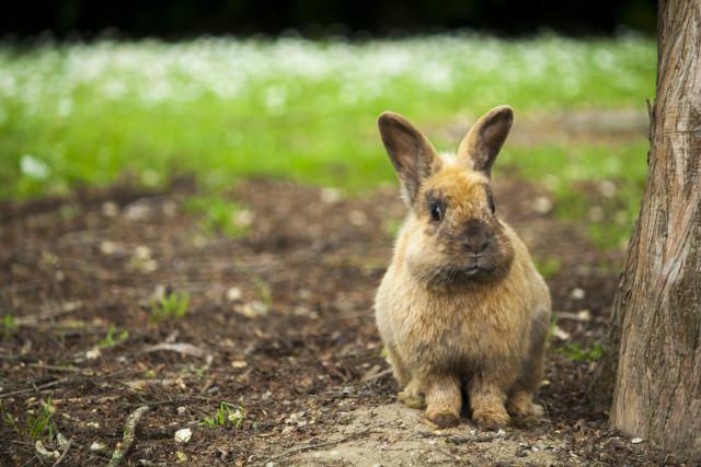 初心者でも飼育しやすいと人気のあるおすすめのウサギの種類は?