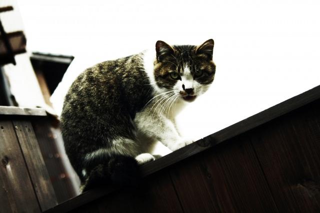 そもそも猫に威嚇される原因は?怒るだけが理由なの?