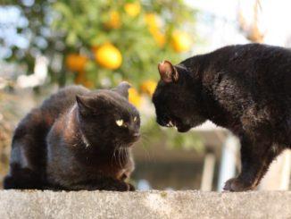 なぜ猫同士で威嚇するの?ケンカする場合に飼い主さんがとるべき行動は?