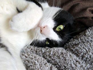 猫に威嚇される原因は何? 愛猫が怒る理由や気持ち、対処や対策方法まとめ!