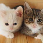 猫のおやつはいつから?子猫と成猫の場合では何が違うの?