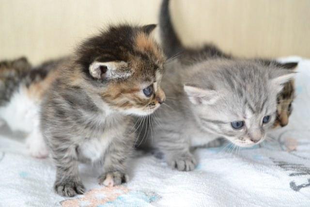 いつから猫におやつをあげても大丈夫?子猫にあげても良いの?