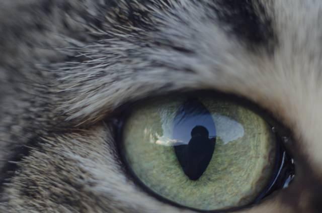 猫に威嚇された時はどうする?おすすめの対処・対策法方法は何?
