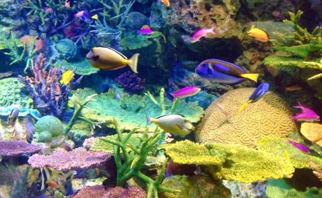2. 藻類の大量発生が水槽の臭いの原因?