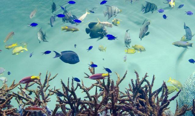 熱帯魚の水槽に白色や緑色の濁りが!その原因とおすすめの対処方法!