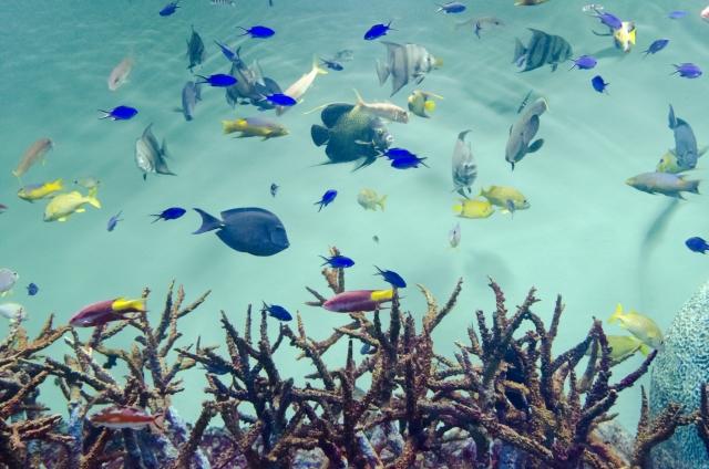 2. 熱帯魚の水槽の緑色の濁りの原因と対処方法