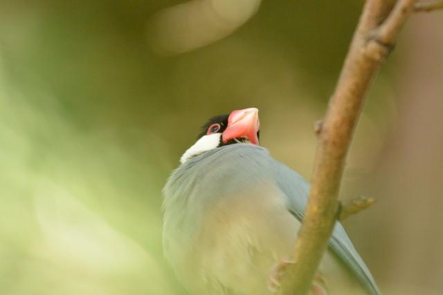 1. 文鳥の威嚇行動の理由と状況
