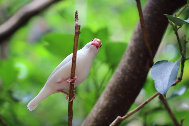 2. 文鳥が爪切りを嫌がって暴れる理由