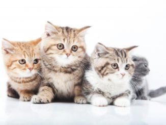 猫と赤ちゃんが同居すると嫉妬するって本当?仲良しになるコツをご紹介!