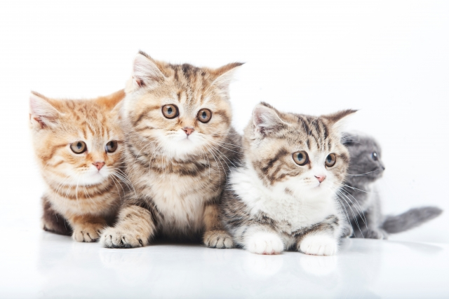 2. これで赤ちゃんと猫も仲良し!優しい子猫さんになってもらうコツを大公開