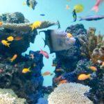 熱帯魚の水槽から嫌な臭いがする!その原因とおすすめの対処方法!