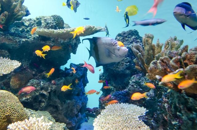 3. 熱帯魚の水槽の大きさが実は臭いの原因?