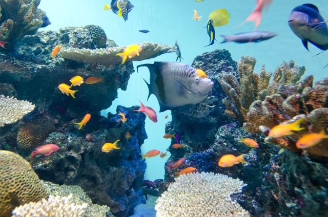 1. 熱帯魚の水槽の白い濁りの原因と対処方法