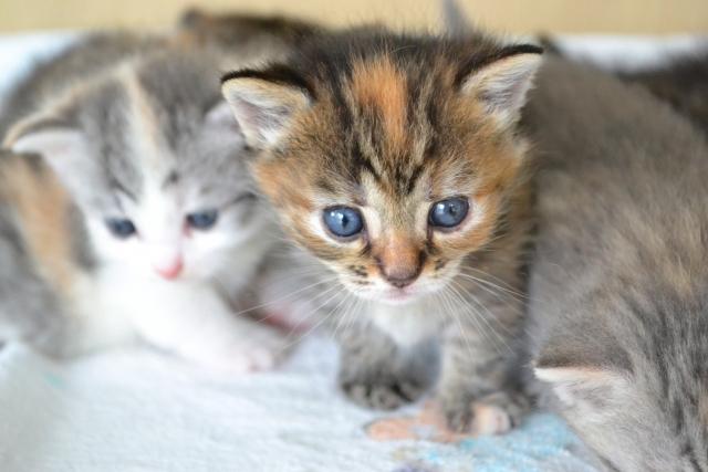 1. 猫と赤ちゃんを同居させると猫は嫉妬してしまう?