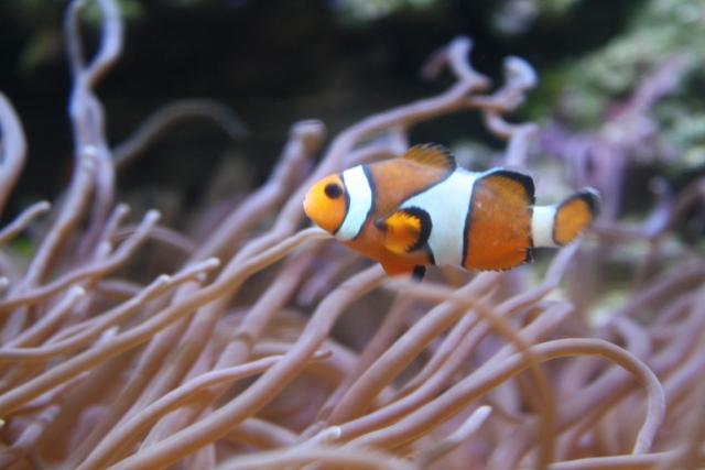 1. 熱帯魚の水槽を移動させる時の注意点