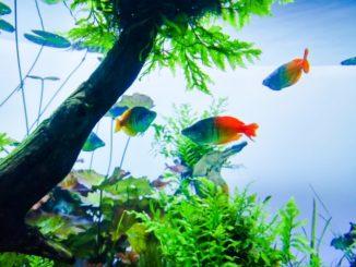引越しには要注意!熱帯魚の水槽を移動させるコツと注意点を総まとめ!