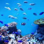 熱帯魚の水槽にコケが生える原因と種類ごとの対策・掃除方法まとめ!