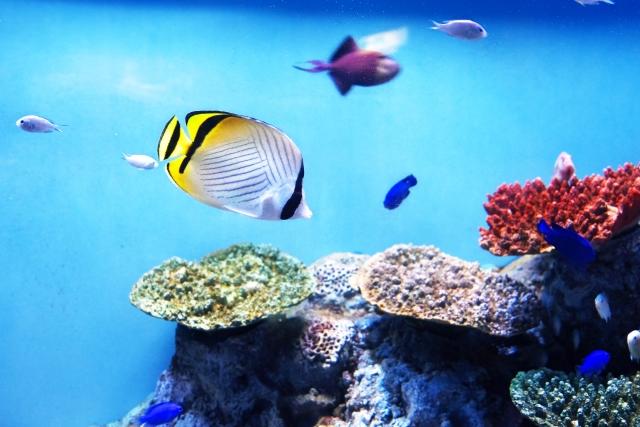 2. 熱帯魚の水槽を移動させる時の手順