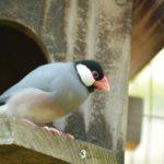 文鳥が威嚇をする理由と怒る時の鳴き声!おすすめの飼育方法もご紹介!