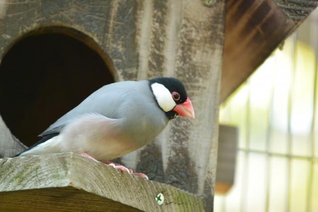 3. 文鳥が威嚇しないように飼育する方法は?