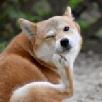 犬の口臭がドブ臭い!その原因と対策方法をまとめてご紹介!