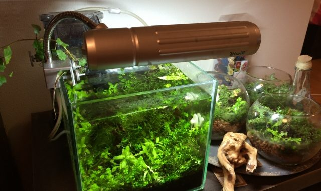 熱帯魚の水槽内での水草の選び方と注意点!レイアウトを上手に見せるコツとは?
