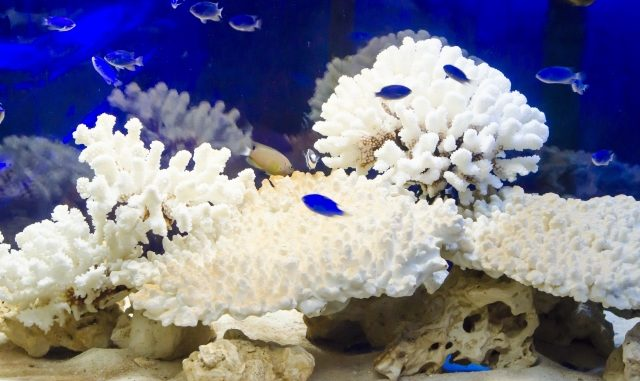 いつも綺麗な水質に!熱帯魚の水槽を掃除するおすすめの魚と選び方!