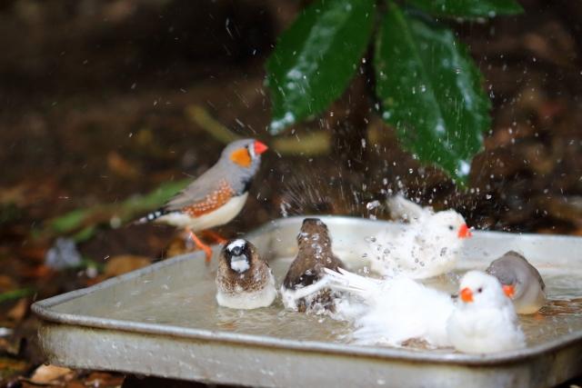 3. 冬に水浴びするときの水温調整