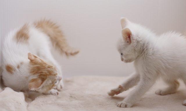 猫が威嚇をしないように育てたい!しつけのコツや対策方法をまとめてご紹介!