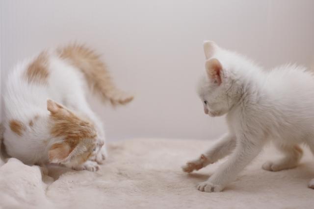 3. 子供や同居猫に威嚇しないようにする対策
