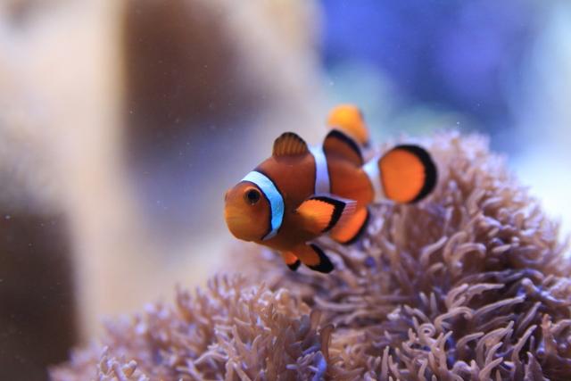 1. 熱帯魚の水槽内の汚れを掃除してくれる魚の選び方