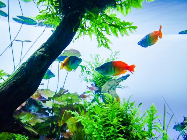 1. 熱帯魚の水槽に水草を入れるメリット