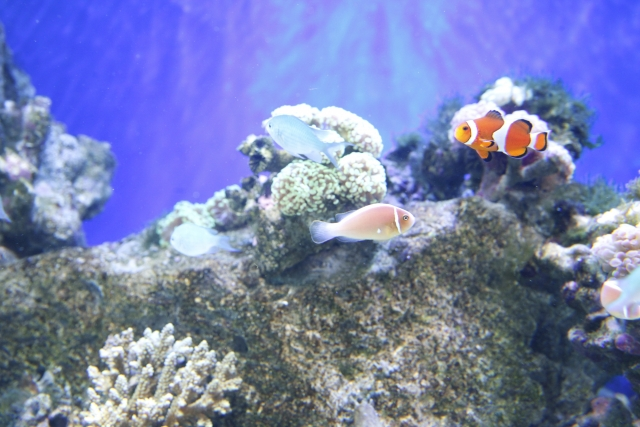 熱帯魚の水槽に出る白い虫①:ミズミミズ