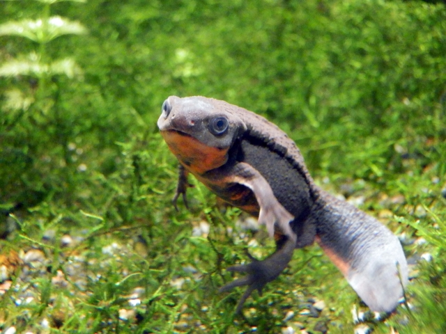 3. イモリの飼育に適した水槽内の環境維持