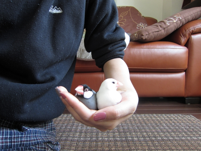 3. 文鳥の爪切りをする際に出血させないための注意点
