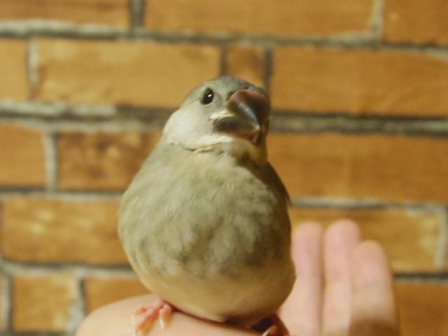 2. 文鳥の雛に水浴びをさせる方法