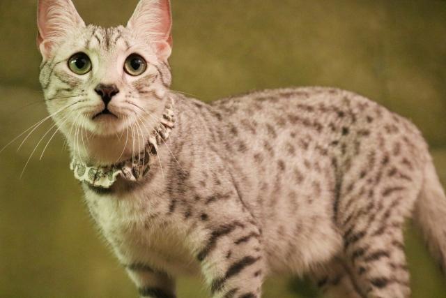 2. 猫が威嚇しないように育てる方法