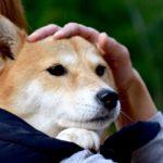 犬の口臭対策には歯磨きがおすすめ!その方法と人気商品をまとめて紹介!