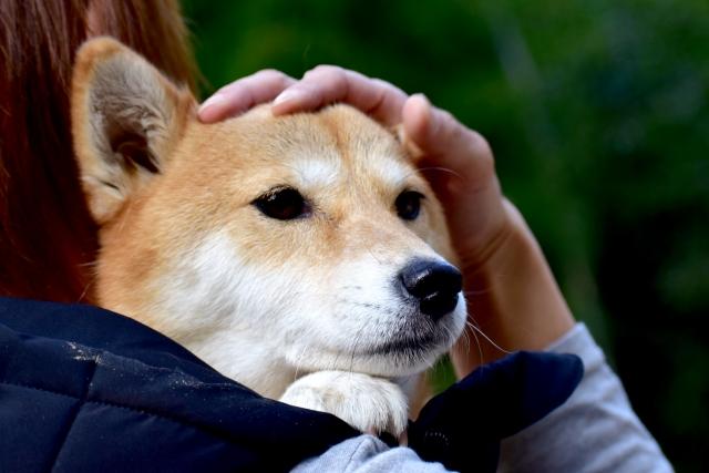 3. 犬が歯磨きを嫌がる場合のおすすめ商品