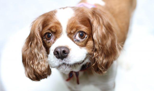 犬の口臭は病気のサイン!?その原因とよくある症状をまとめてご紹介!