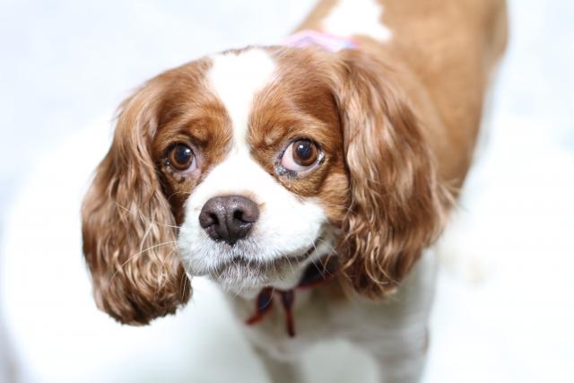 3. 犬は糖尿病で口臭が臭くなることも!