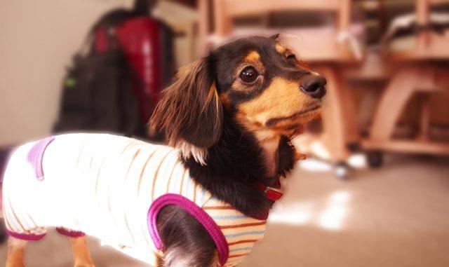 効果てきめん!ペットの犬がうるさい時のしつけの方法をパターン別に解説!