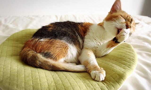 【永久保存版】猫の尿のにおい消しに効果抜群な対策方法を総まとめ!