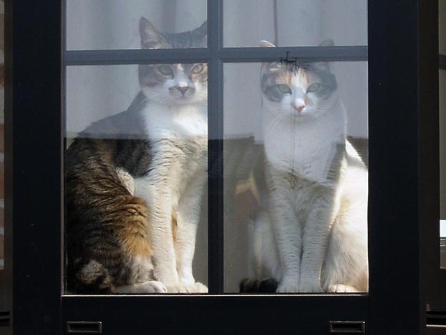 2. 猫に臭いはあるの?