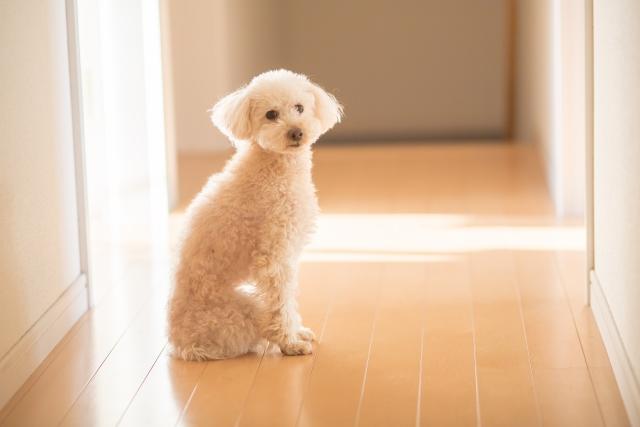 2. 犬の口臭は内臓や腸内器官の病気のサイン!?