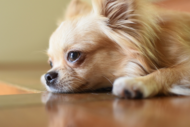 4. メスの愛犬が発情期を迎えた時のマナー