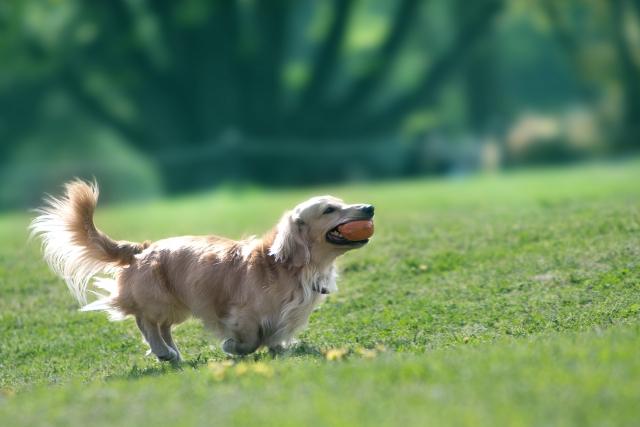 2. ヨーグルトを使用した犬の歯磨きは口臭対策にバッチリ!