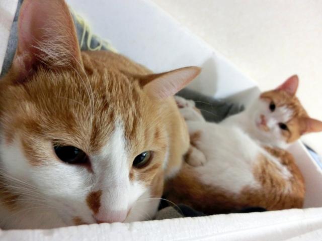 1. 熱湯で猫の尿のにおいを消す