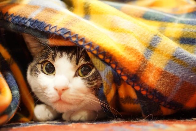 1. 飼い主さんは猫の臭いに気付きにくい!