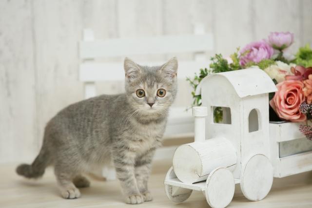 3. 猫のスプレー行為に注意